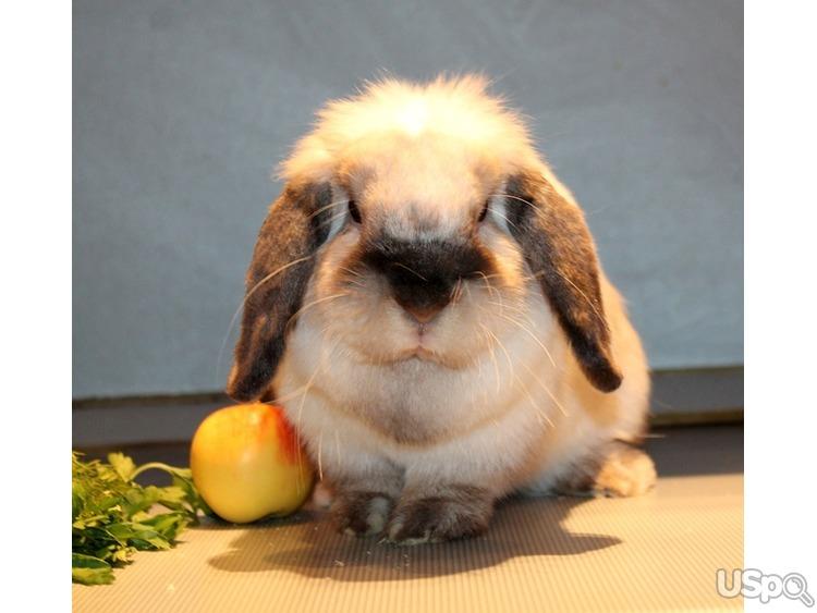 Декоративные кролики на новый год из питомника