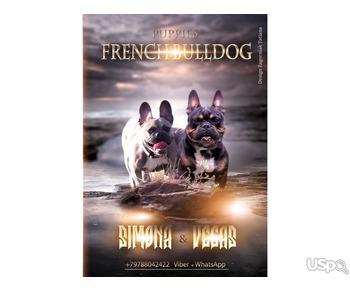 Щенки французского бульдога french_bulldogs