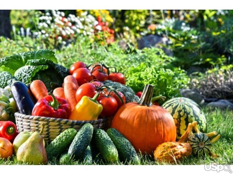 Требуются работники на  органическую овощную ферму
